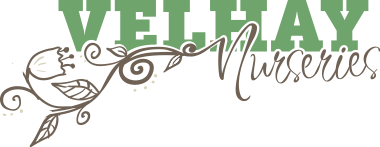 velhay-nurseries-logo